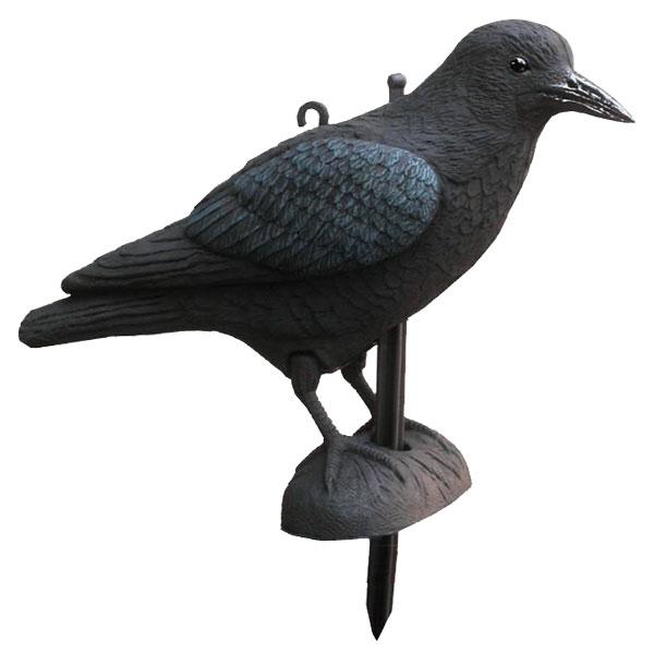appelant corbeau appeaux akah. Black Bedroom Furniture Sets. Home Design Ideas
